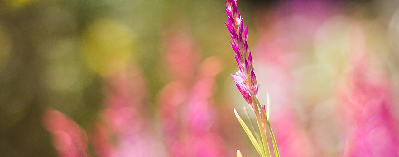 Take rest;  a field that is rested gives a bountiful crop.~ Ovid