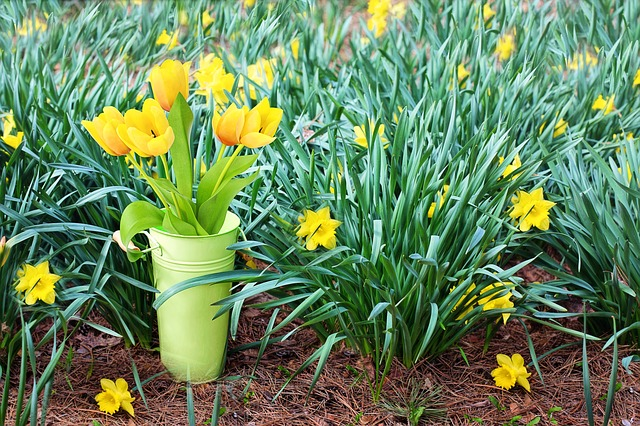 Holistic self care techniques to maintain health spring season spring flowers pixabay mightylinksfo